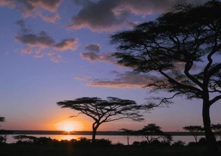 Kenya Savana-1