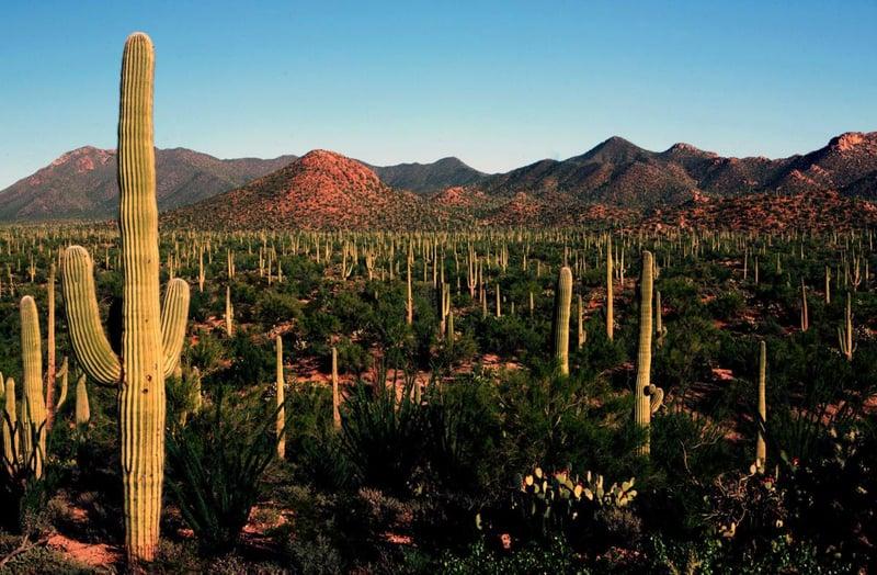 saguaronatpark